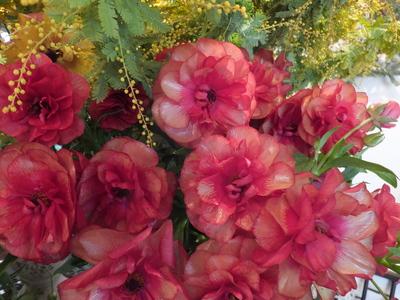 オークリーフ(春の花木)_f0049672_17423073.jpg