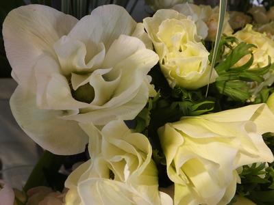 オークリーフ(春の花木)_f0049672_1743134.jpg