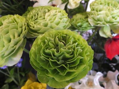 オークリーフ(春の花木)_f0049672_17431897.jpg