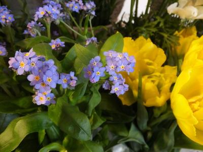 オークリーフ(春の花木)_f0049672_17441728.jpg