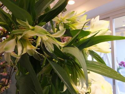 オークリーフ(春の花木)_f0049672_17443962.jpg