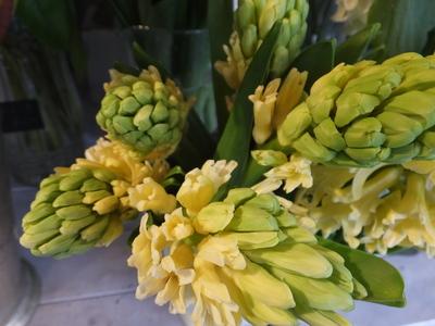 オークリーフ(春の花木)_f0049672_1744773.jpg