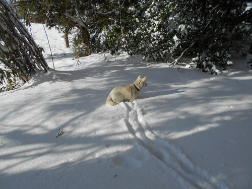 全国的に大雪です_e0036983_1135929.jpg
