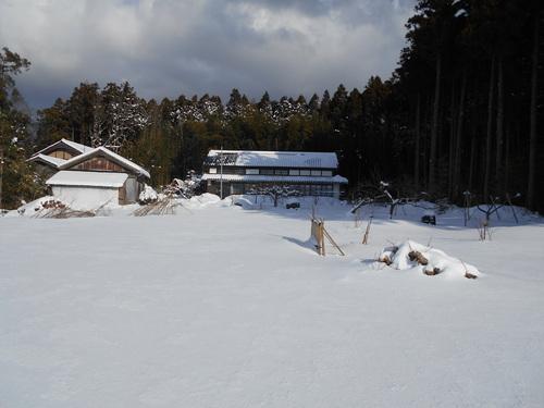 全国的に大雪です_e0036983_114468.jpg