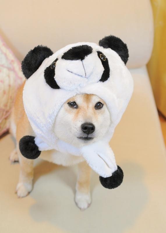 パンダなの_a0126590_23561772.jpg