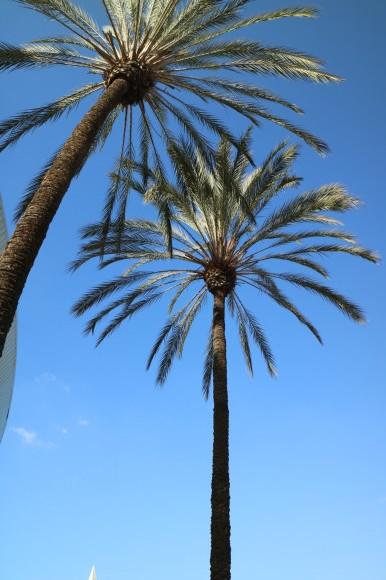 ロサンゼルス3日目_b0275998_10575295.jpeg