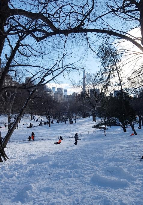 大雪翌日のNY、白銀のセントラルパークへ!!!_b0007805_5535971.jpg