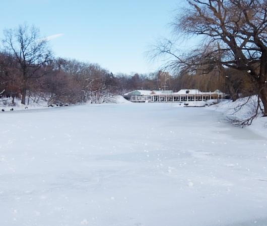 大雪翌日のNY、白銀のセントラルパークへ!!!_b0007805_554517.jpg