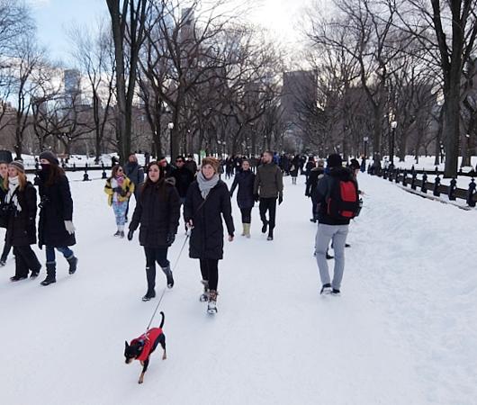 大雪翌日のNY、白銀のセントラルパークへ!!!_b0007805_555553.jpg