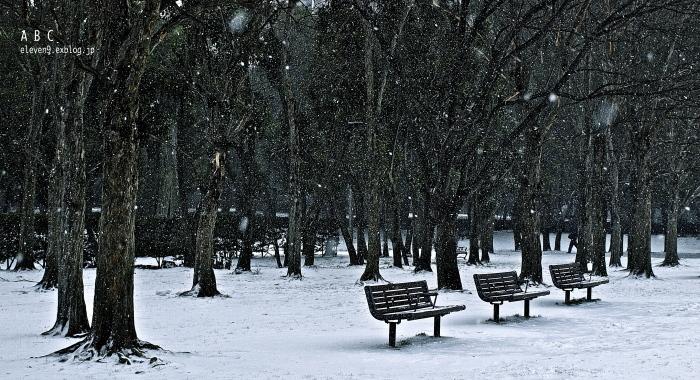 snow storm_f0315034_15064902.jpg