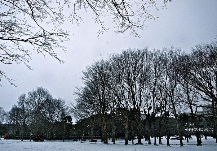 snow storm_f0315034_15430297.jpg