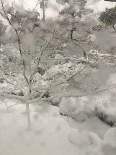 雪がキラキラ♪_a0271541_20032672.jpg