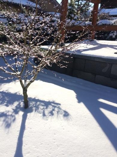 雪がキラキラ♪_a0271541_20040432.jpg