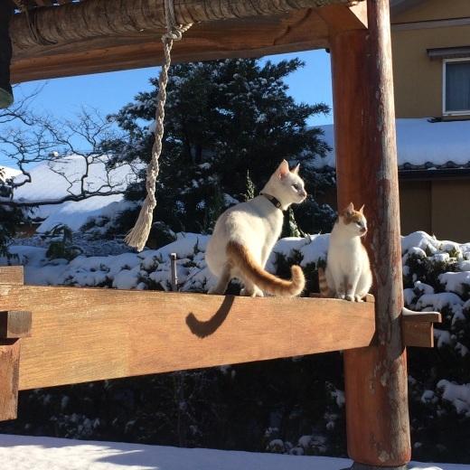 雪がキラキラ♪_a0271541_20045021.jpg
