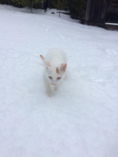 雪がキラキラ♪_a0271541_20051887.jpg