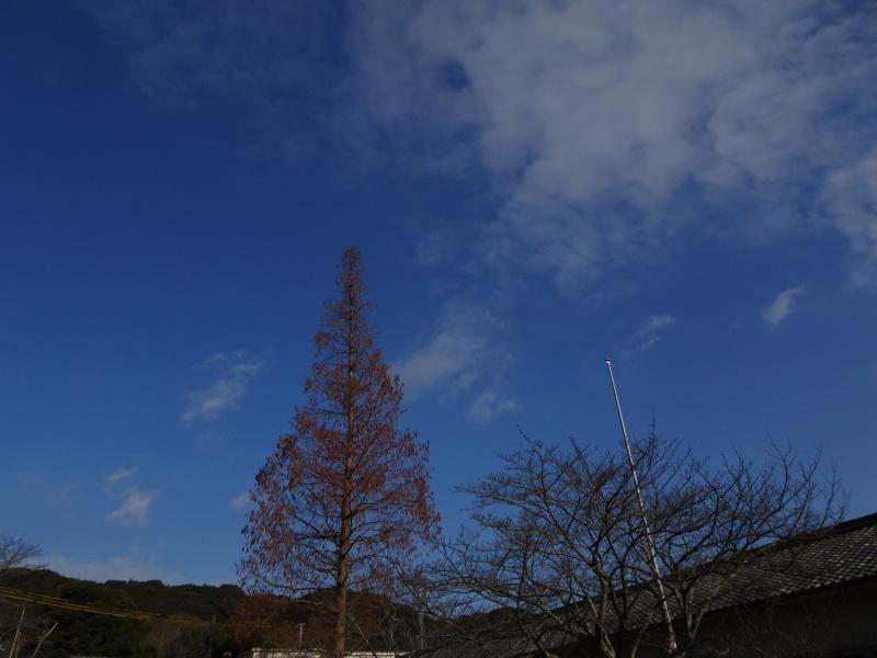 道普請もやってます in 孝子の森     by     (TATE-misaki)_c0108460_21175575.jpg
