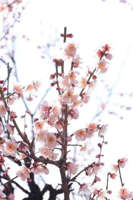 2月メニュー_c0343664_13315240.jpg