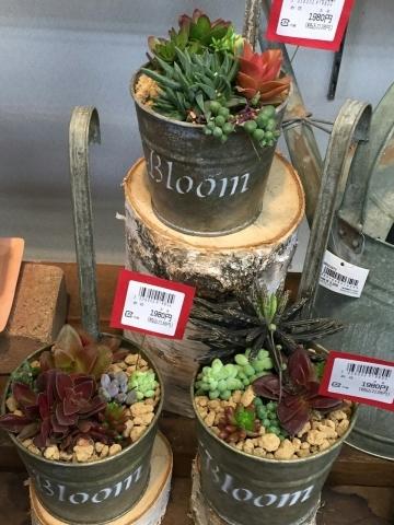 多肉植物_b0208976_19085052.jpg