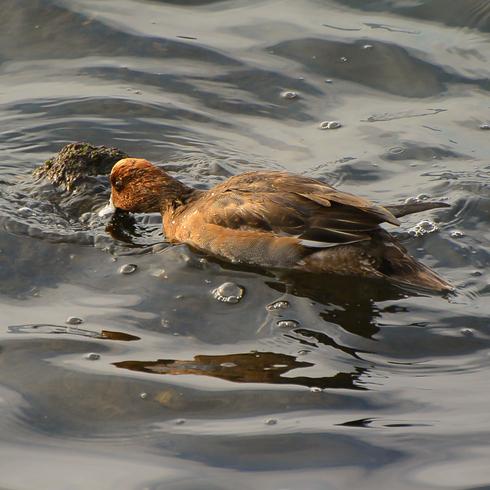 瀬戸沿岸部に沢山の鳥たちが。_f0099102_2026148.jpg