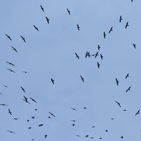 瀬戸沿岸部に沢山の鳥たちが。_f0099102_20264084.jpg
