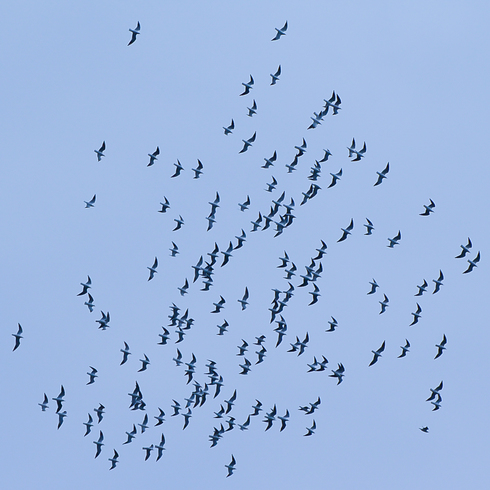 瀬戸沿岸部に沢山の鳥たちが。_f0099102_20264736.jpg