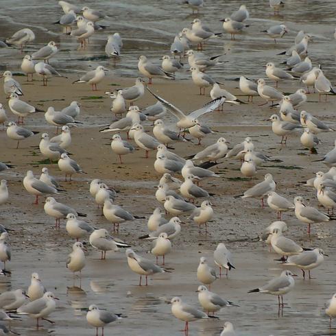 瀬戸沿岸部に沢山の鳥たちが。_f0099102_20265271.jpg