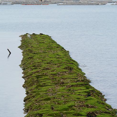 瀬戸沿岸部に沢山の鳥たちが。_f0099102_2027027.jpg