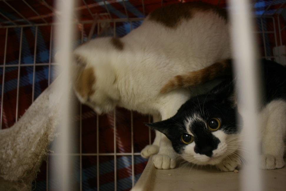 【移動先募集】センター(本所)収容猫(1/23訪問)_f0242002_14262231.jpg