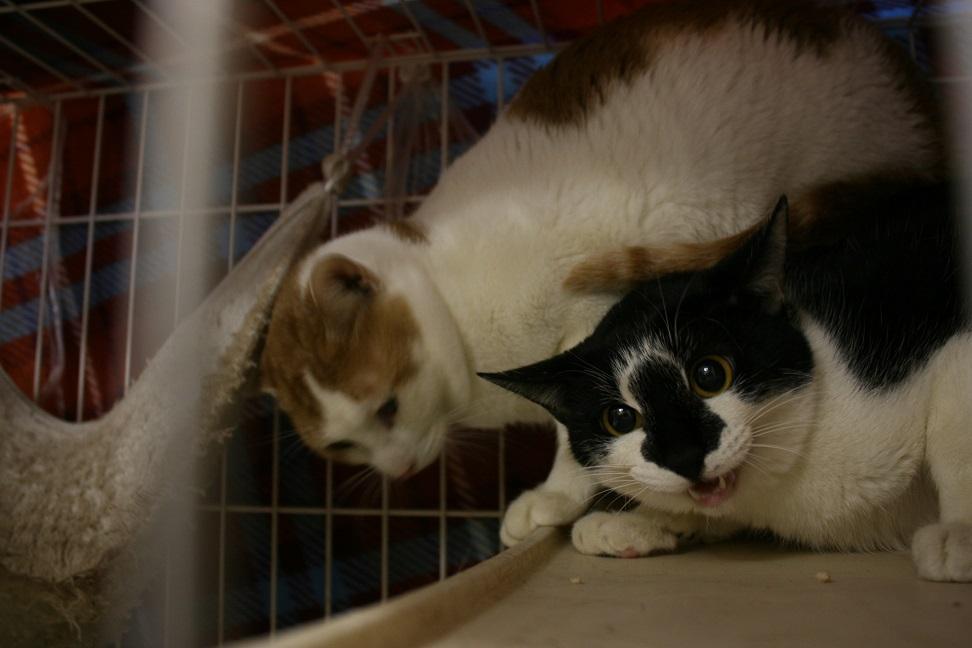 【移動先募集】センター(本所)収容猫(1/23訪問)_f0242002_14263327.jpg