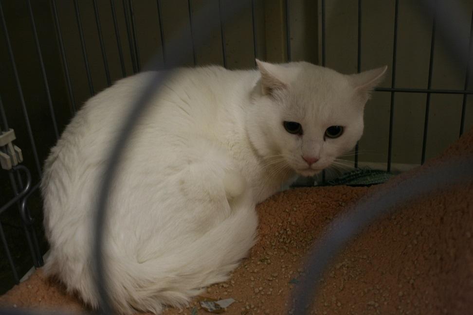 【移動先募集】センター(本所)収容猫(1/23訪問)_f0242002_1426717.jpg