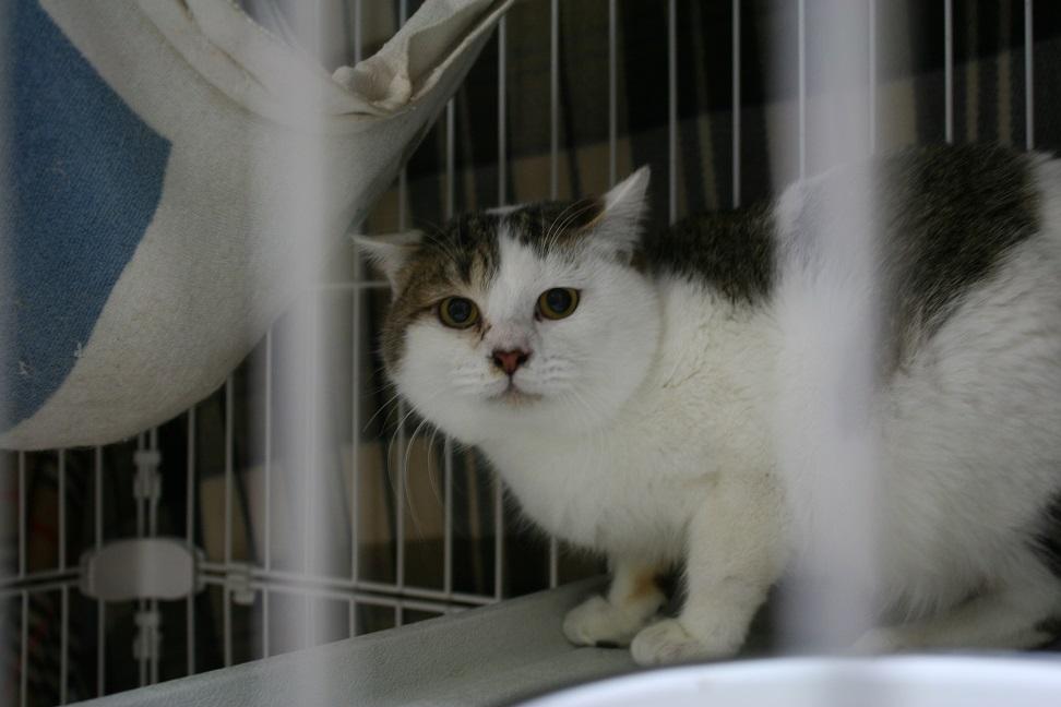 【移動先募集】センター(本所)収容猫(1/23訪問)_f0242002_14361954.jpg