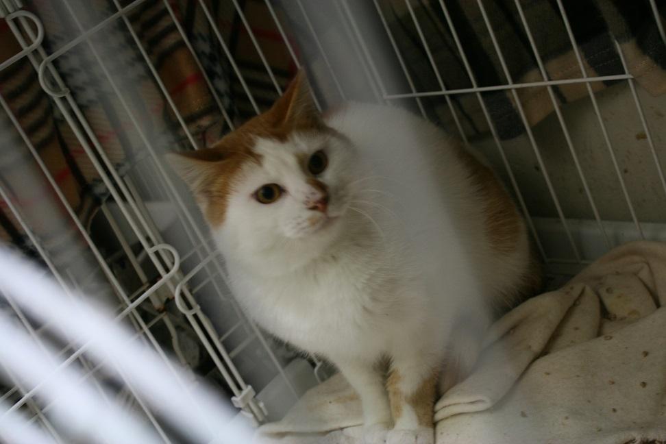 【移動先募集】センター(本所)収容猫(1/23訪問)_f0242002_14363062.jpg