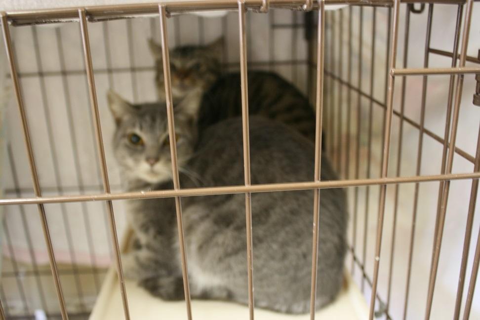 【移動先募集】センター(本所)収容猫(1/23訪問)_f0242002_1436554.jpg