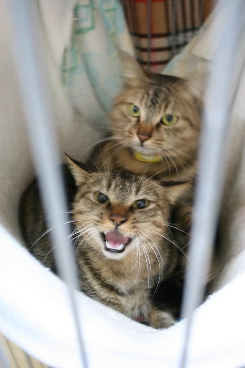 【移動先募集】センター(本所)収容猫(1/23訪問)_f0242002_14373668.jpg