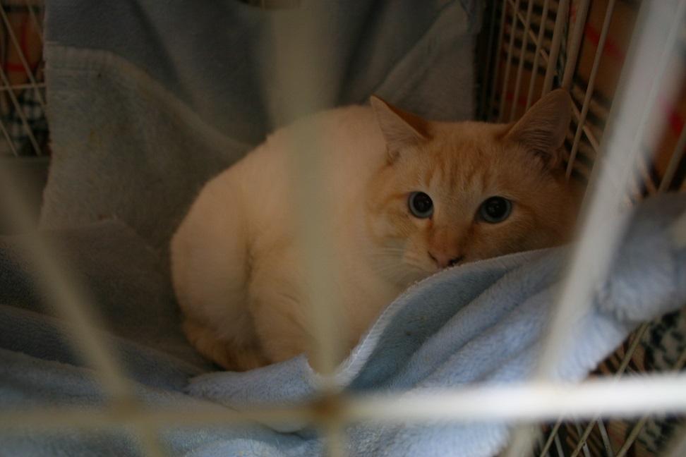 【移動先募集】センター(本所)収容猫(1/23訪問)_f0242002_1437421.jpg