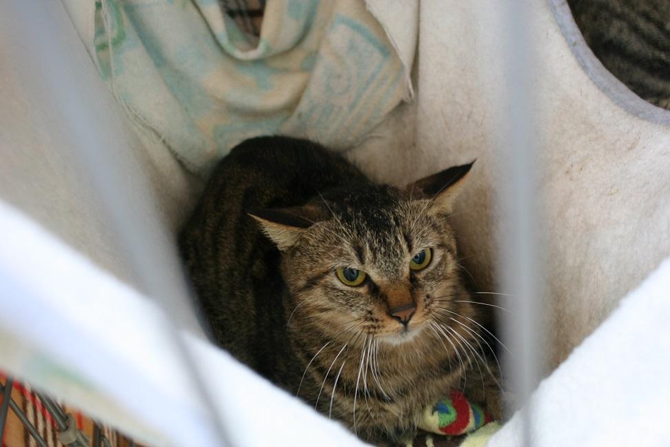 【移動先募集】センター(本所)収容猫(1/23訪問)_f0242002_14375088.jpg