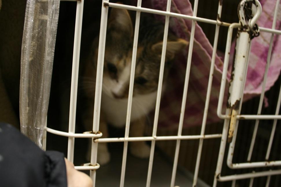 【移動先募集】センター(本所)収容猫(1/23訪問)_f0242002_1438182.jpg