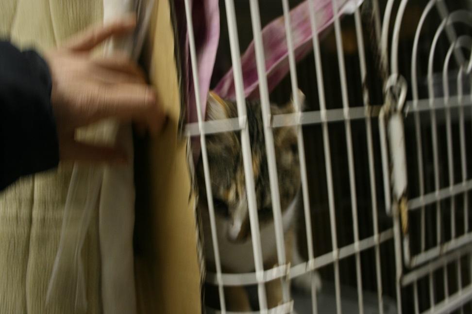 【移動先募集】センター(本所)収容猫(1/23訪問)_f0242002_143881.jpg