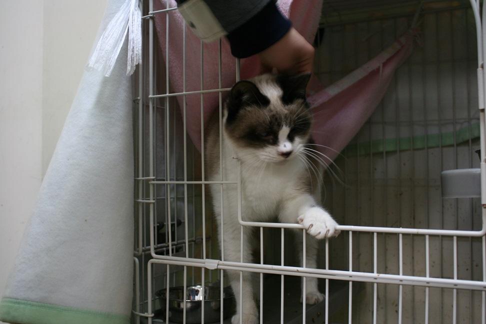 【移動先募集】センター(本所)収容猫(1/23訪問)_f0242002_14394386.jpg
