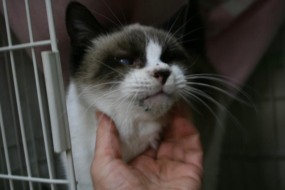 【移動先募集】センター(本所)収容猫(1/23訪問)_f0242002_14394916.jpg