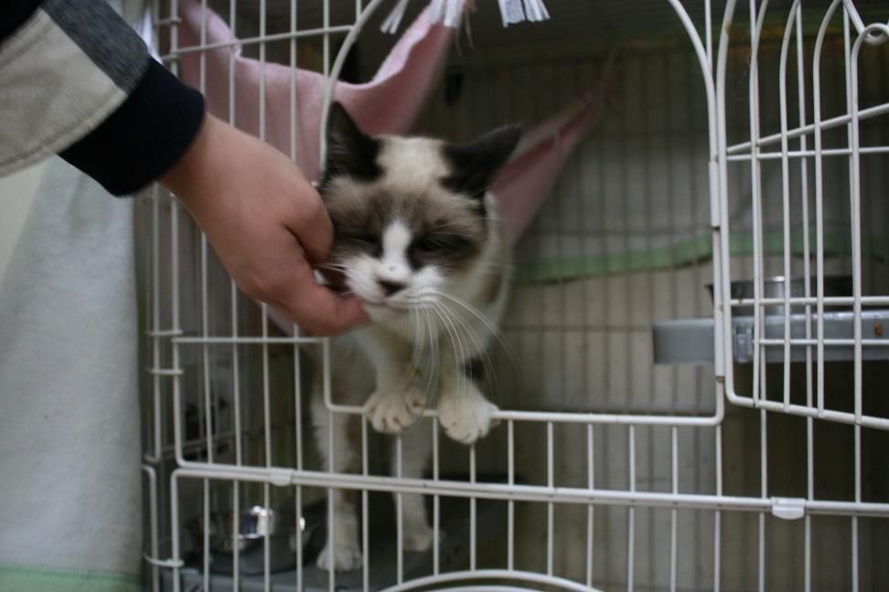 【移動先募集】センター(本所)収容猫(1/23訪問)_f0242002_14395751.jpg