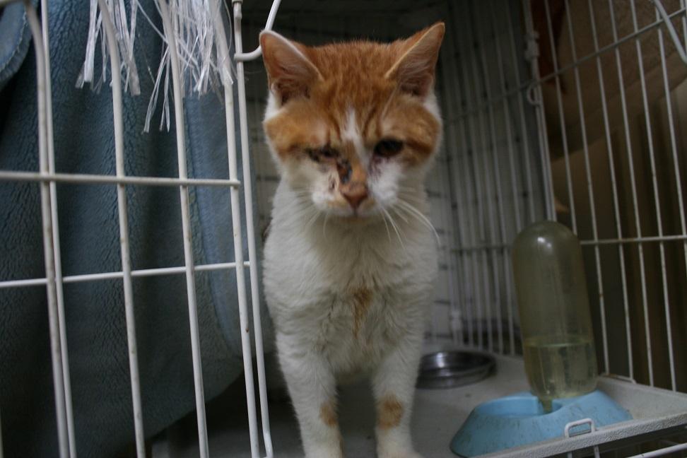 【移動先募集】センター(本所)収容猫(1/23訪問)_f0242002_14402550.jpg