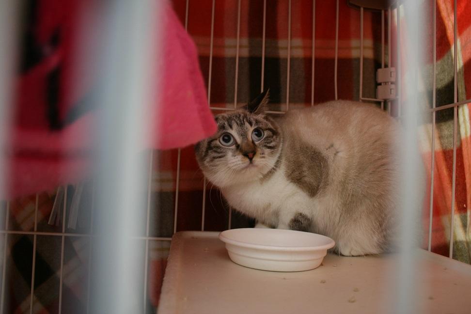 【移動先募集】センター(本所)収容猫(1/23訪問)_f0242002_14414163.jpg