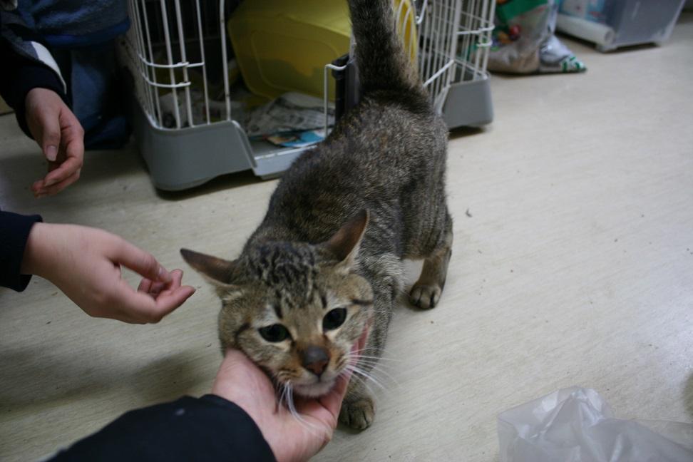 【移動先募集】センター(本所)収容猫(1/23訪問)_f0242002_1441710.jpg