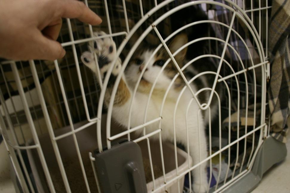 【移動先募集】センター(本所)収容猫(1/23訪問)_f0242002_14433083.jpg