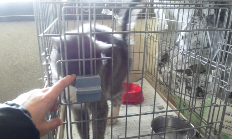【移動先募集】センター(本所)収容猫(1/23訪問)_f0242002_14435946.jpg