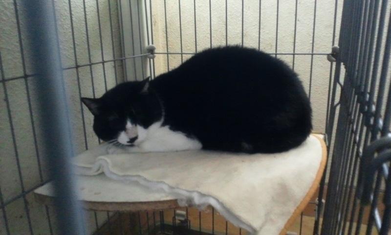 【移動先募集】センター(本所)収容猫(1/23訪問)_f0242002_144535.jpg
