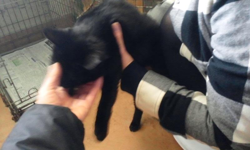【移動先募集】センター(本所)収容猫(1/23訪問)_f0242002_14453548.jpg