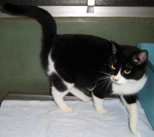 【移動先募集】センター(本所)収容猫(1/23訪問)_f0242002_14464895.jpg