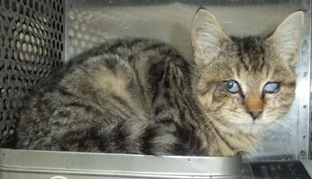 【移動先募集】センター(本所)収容猫(1/23訪問)_f0242002_14473327.jpg